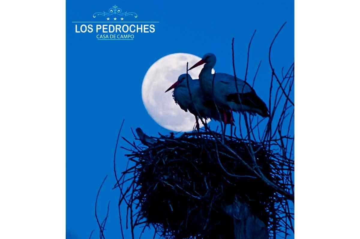 Pareja de cigüeñas bajo la luna en casa los Pedroches