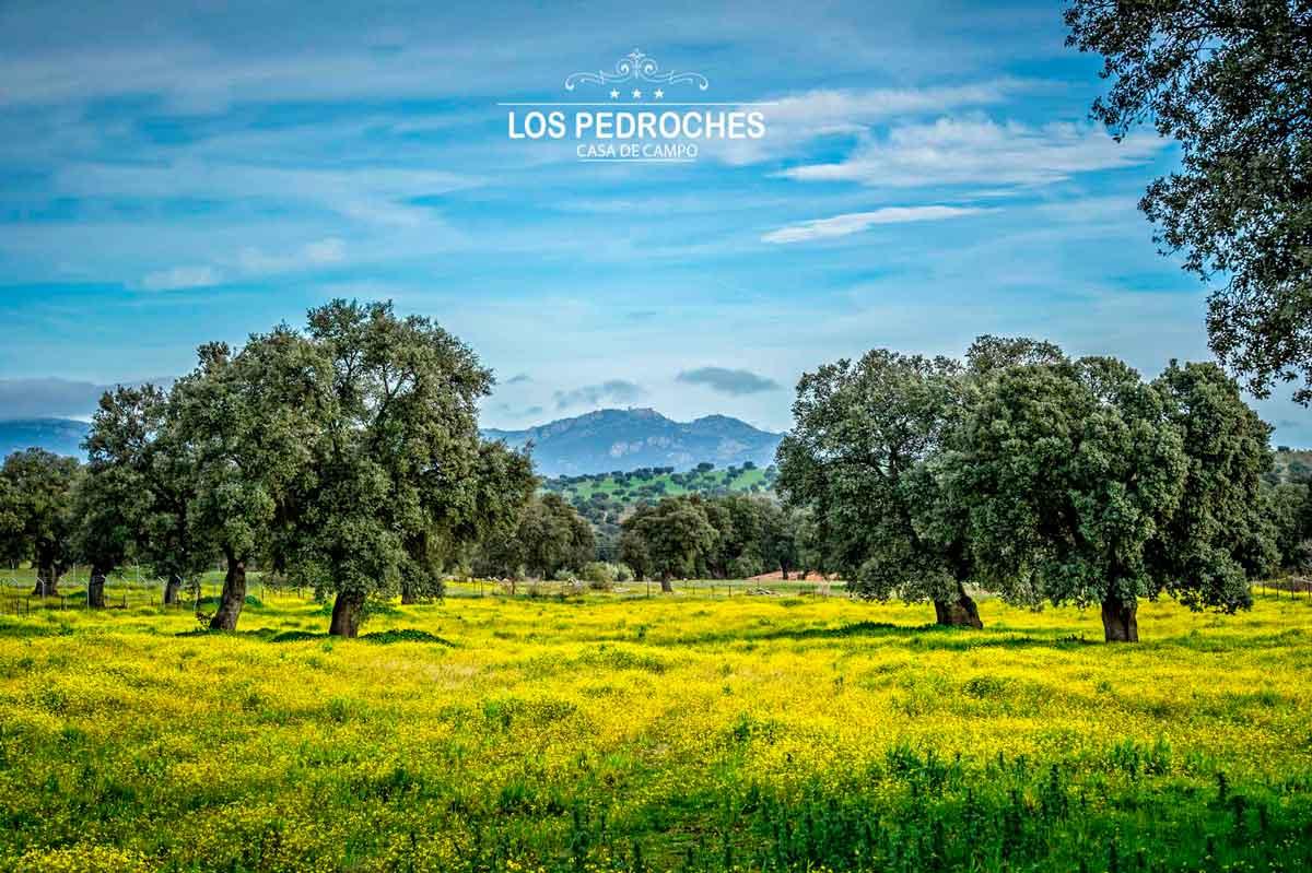 Belleza de la dehesa del valle de los Pedroches