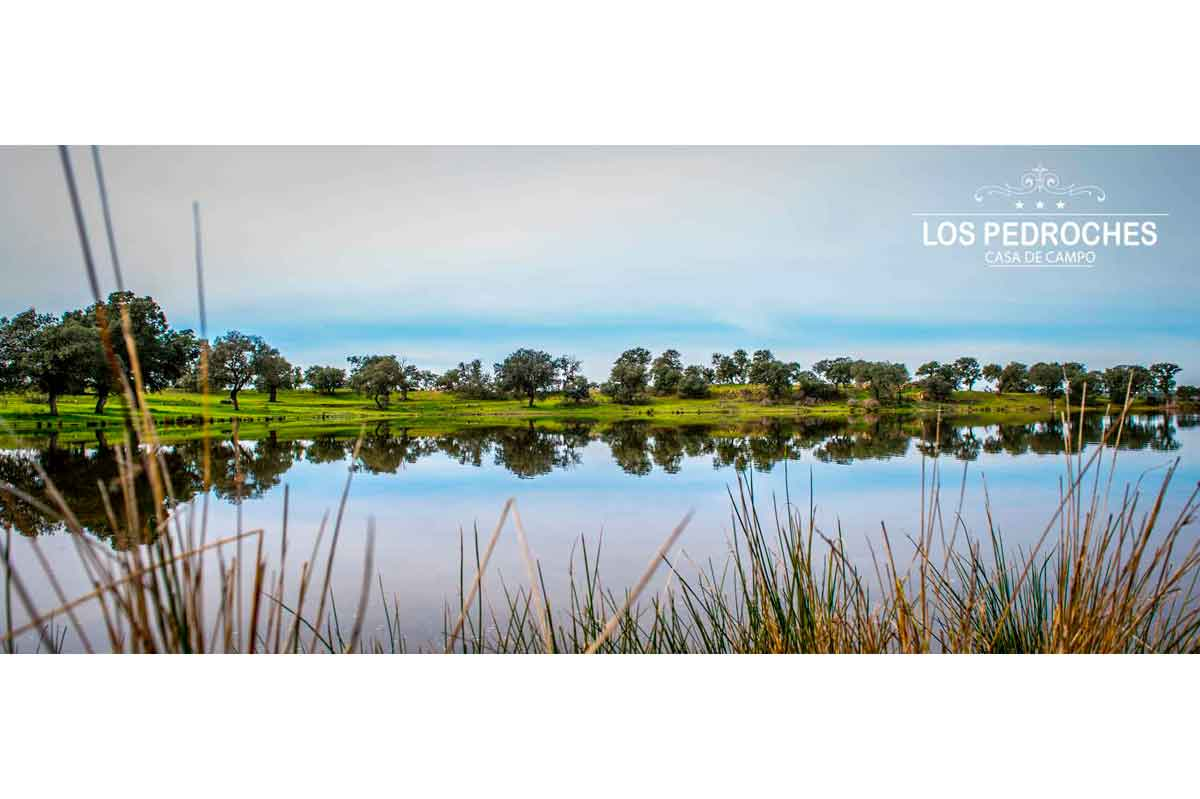 Laguna en la dehesa de los Pedroches