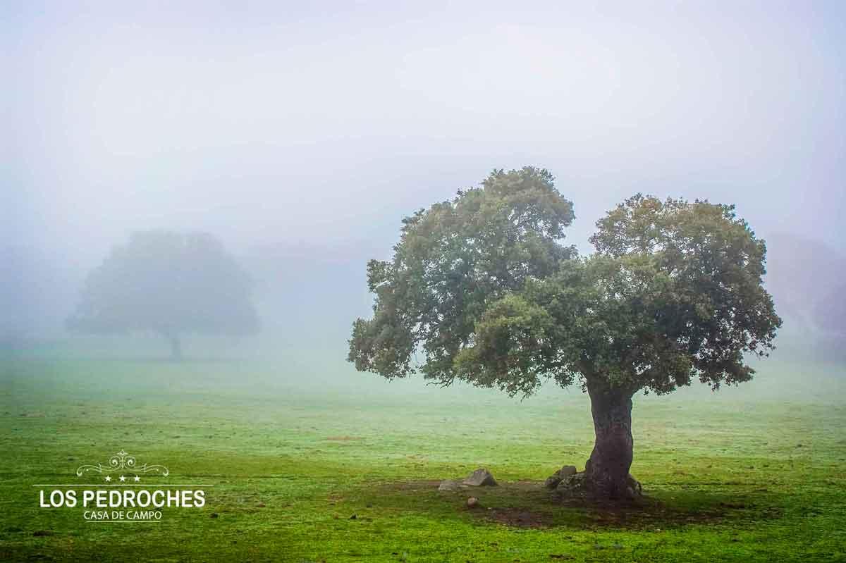 Encinas de los Pedroches entre niebla