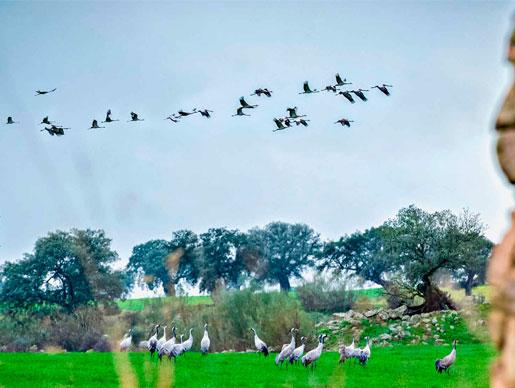 Actividades de Birdwatching en Casa los Pedroches