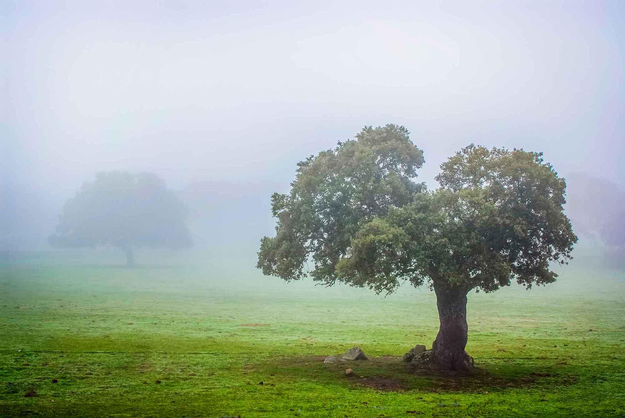 La dehesa de los Pedroches entre niebla