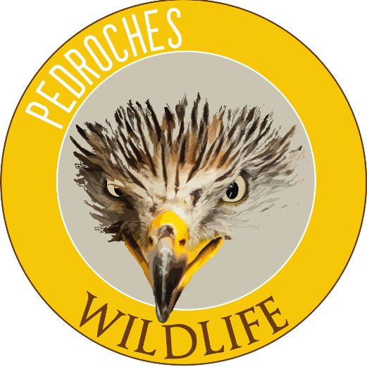 logo wildlife Los Pedroches